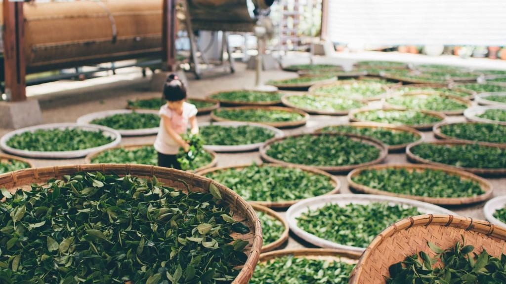 Herstellung und Verarbeitung von Tee